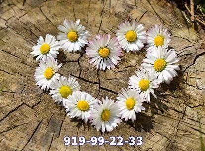 Videntes del amor españoles 919992233 economico