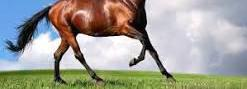 Compra de caballos para matadero en badajoz