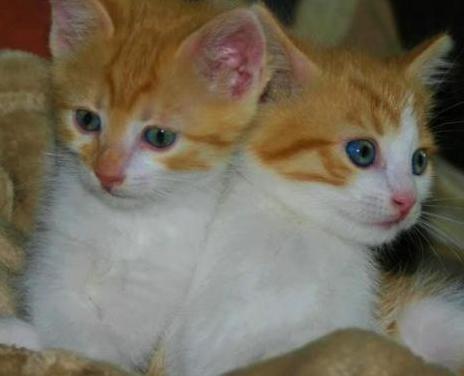 Dani y mona gatos adopción villanimal