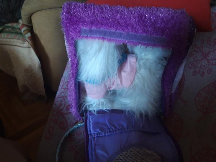 Perro peluche con bolso transporte nuevo