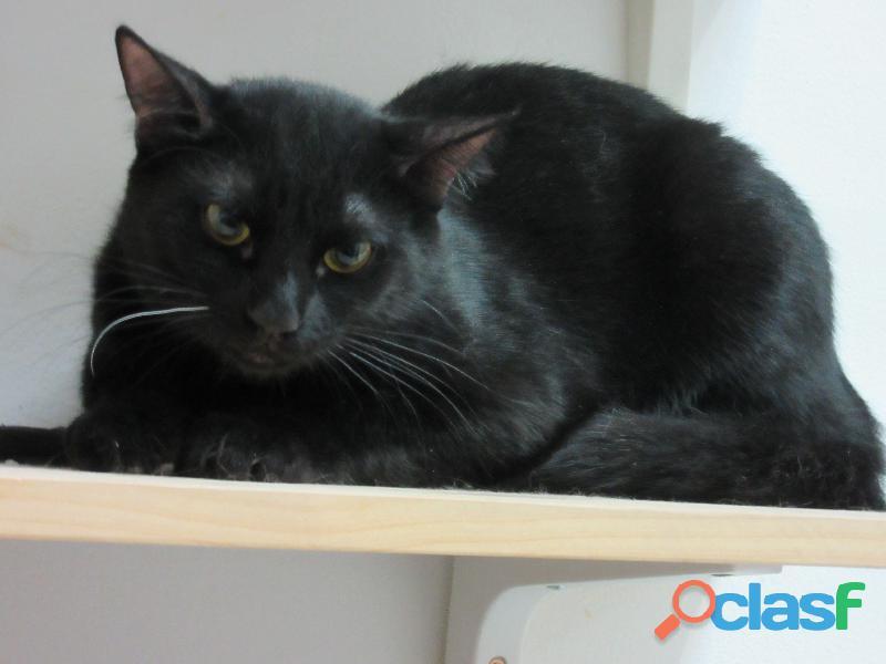 Morey. gato negro