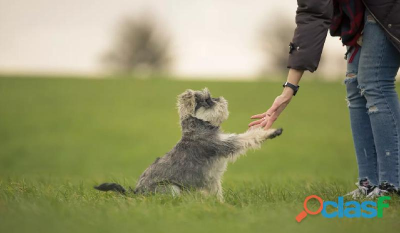 Que hacer para que te obedezca tu perro