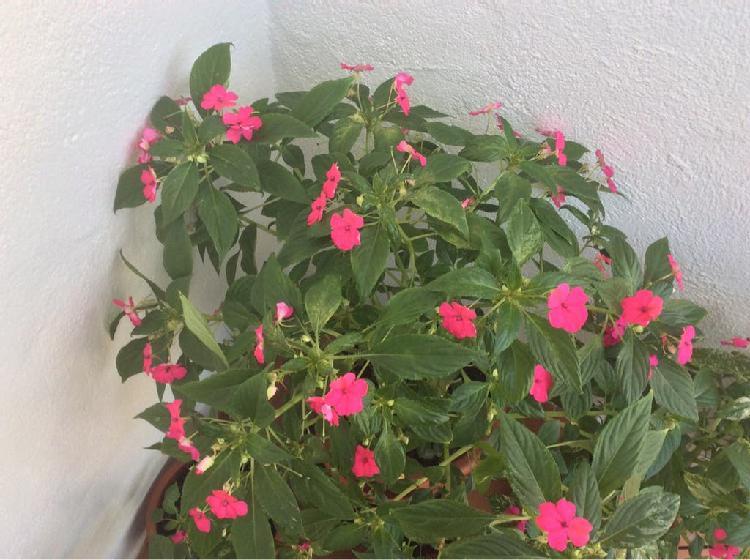 Plantas naturales alegrías de la casa