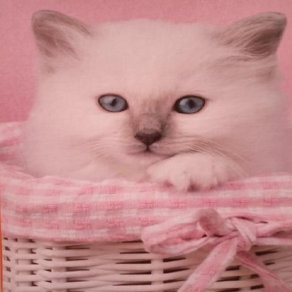 Puzzle de gatito