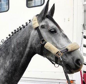 Cabezada de cuadra caballo