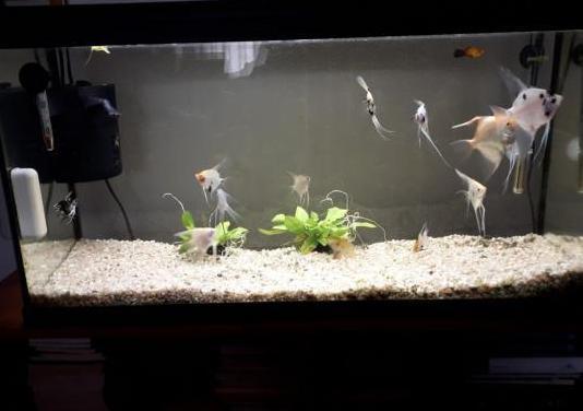 Acuario tropical 95 litros completo, con peces