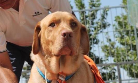 Fabian perrito de 5 años adopción