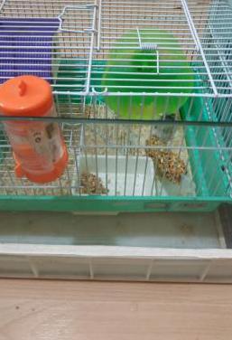 Jaula hamster y urna