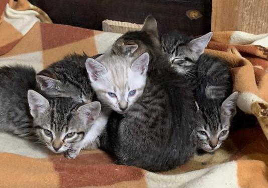 Regalo gatitos.