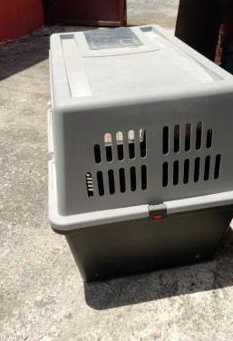 Transportines para perros