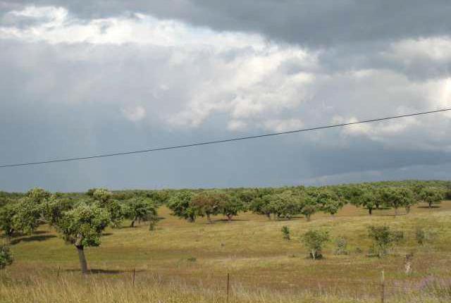 Venta de finca dehesa excelente tierra y pasto en cáceres