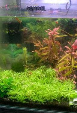 Acuario aquael 30 litros
