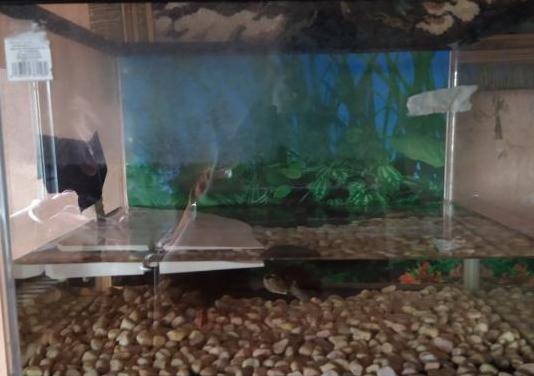 Pecera tortuga y peces