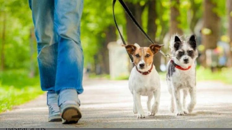 Paseo perros en madrid