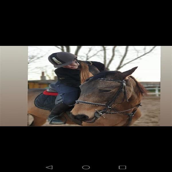 Cabezada de trabajo equitación