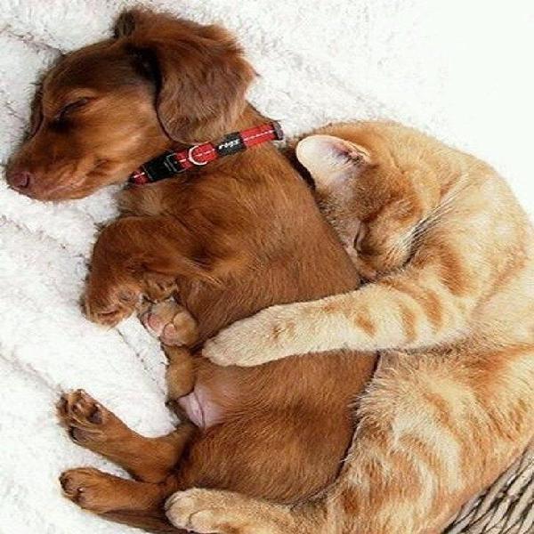 Residencia/cuidado de mascotas