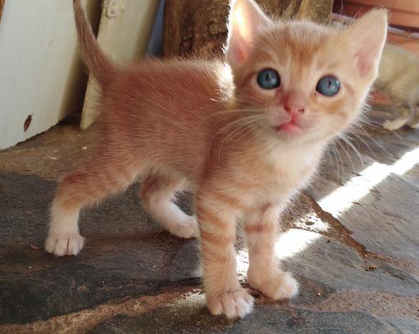 Se regalan gatitos