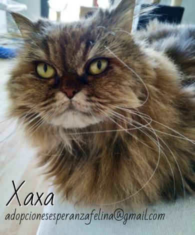Xaxa, en adop. alava-españa. (f. n. 2010)
