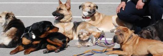 Adiestrador canino