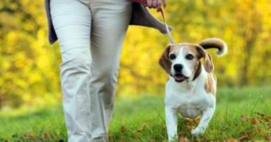 Paseador y cuidador de animales de compañia
