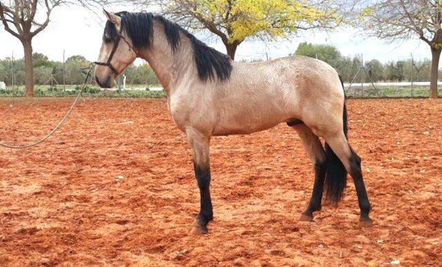 Venta de caballo pra en sevilla