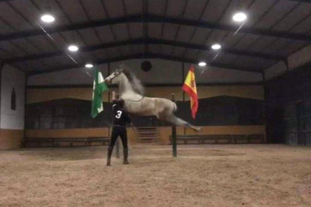 Venta de caballo pre en sevilla