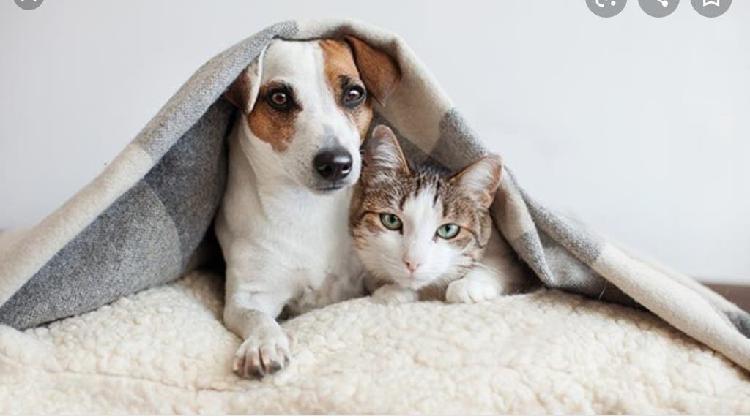 Cuido animales y paseo perros