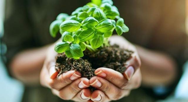 Plantas medicinales de la vida