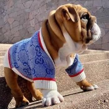 Cachorros bulldog registrados