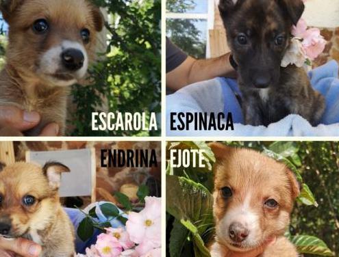 Cachorros perro en adopción