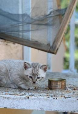 Damos gatito en adopción.