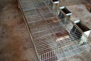 Jaulas conejos - extrona