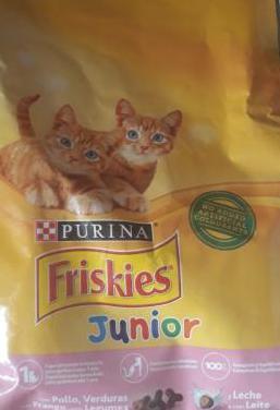Pienso para gatitos