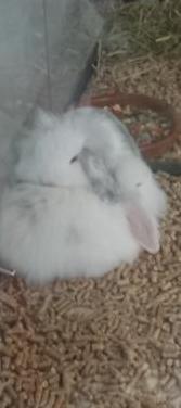Conejos, cobayas, hamster