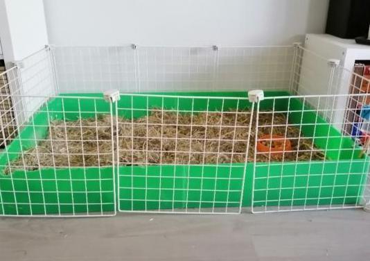 Jaula abierta roedores