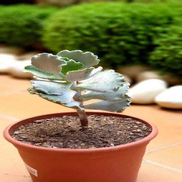 Selección cactus exóticos (mas plantas en mi perfi