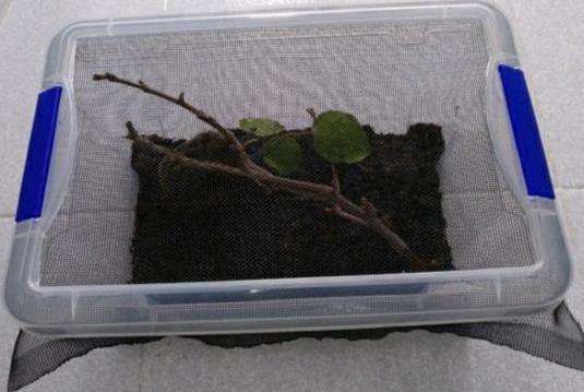 Caja terrario insectos palo