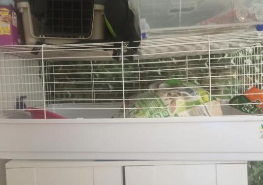 Jaula para conejo o cobaya