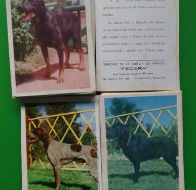 80 cromos razas perros,fedora,1965