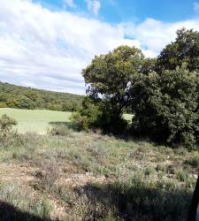 Coto de caza hinojosos - cuenca