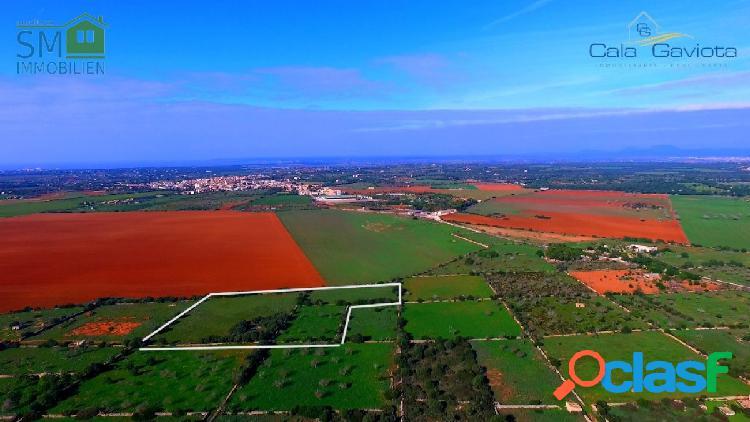 Terreno rústico de más de 18.500 m2 cerca de ses salines