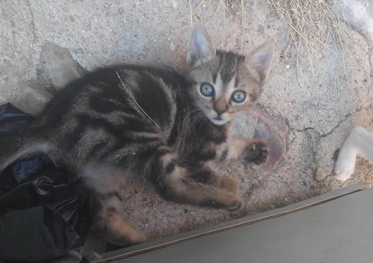 Se dan gatitos en adopción