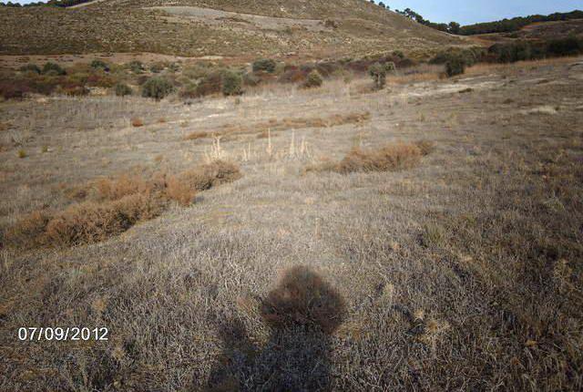 Venta de finca rústica de tierra calma en granada