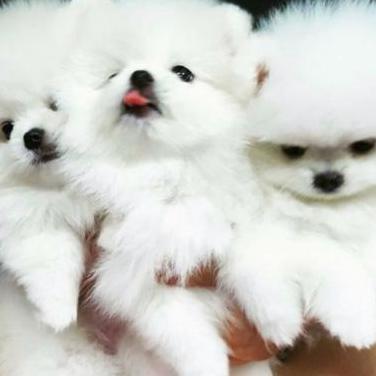 Lindos cachorros de lindos cachorros