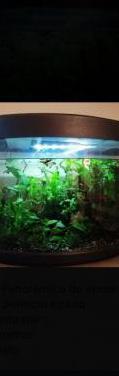 Pecera/ aquario panoramico