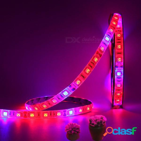 Planta de 5m 60w 300-5050 smd led con luz de tira de espectro completo led, 12v, 5 rojo + 1 luz azul, no impermeable