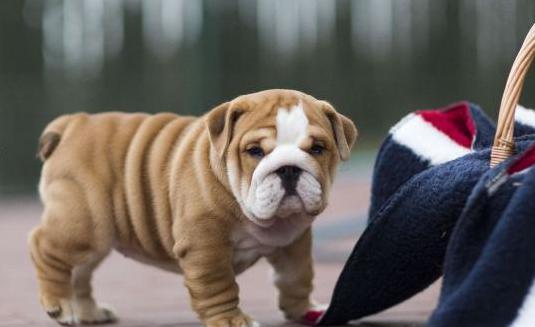 Bulldog inglés experimentado