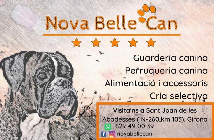 Nova belle can (guarderia canina)