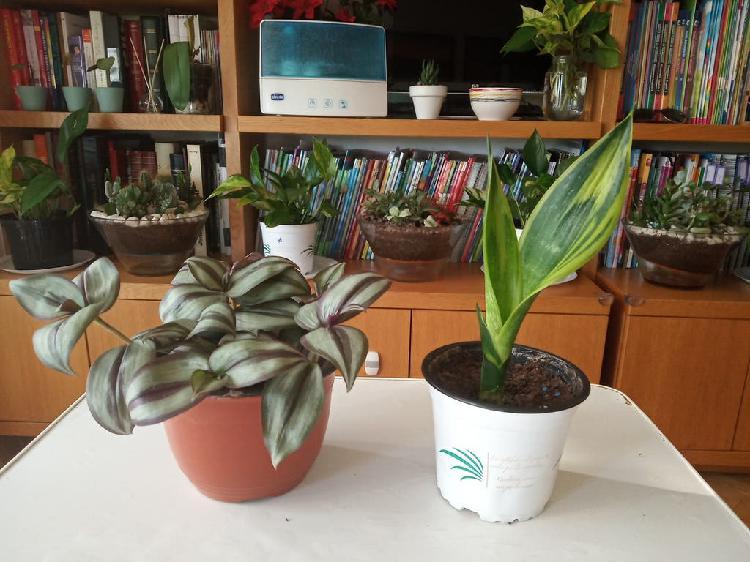 Plantas ( set de 2 plantas a 5€)