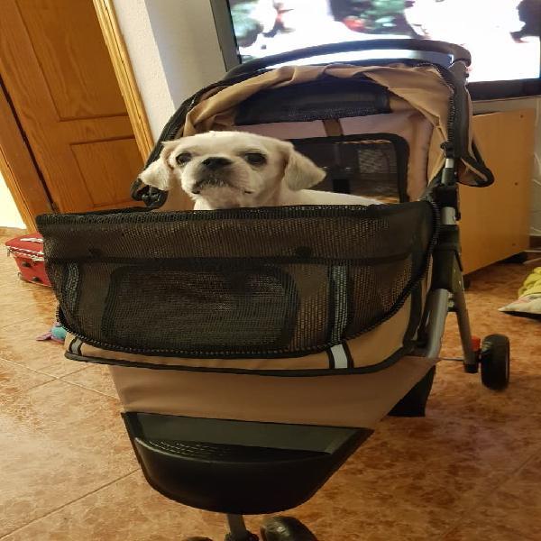 Cuidadora de mascotas o paseadora